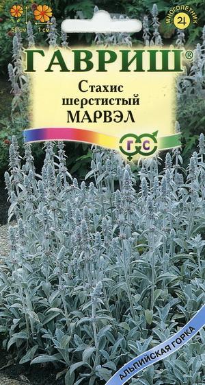 Стахис нежность выращивание из семян 927