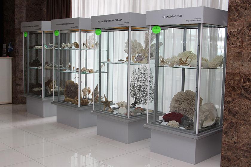 витрины для музеев картинки аминокислоты
